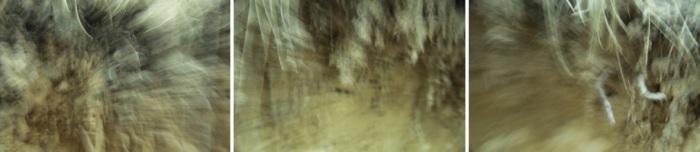 salon-banner-image-haunting-erosions1